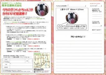 ペットちゃん総選挙